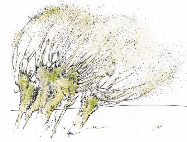 de Wieden (skizziert von Ines Höfs)